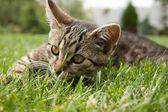 Small cat — Stock Photo