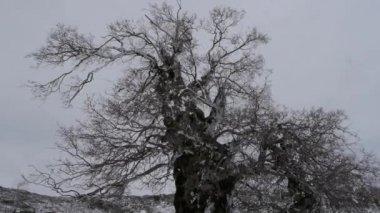 Träden på vintern — Stockvideo