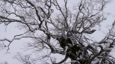 Bomen in de winter — Stockvideo