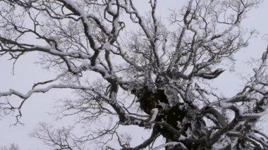árvores no inverno — Vídeo Stock