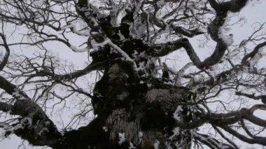 Stromy v zimě — Stock video