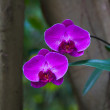 Orchids — Stock Photo #41630069