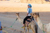 Tour camel Egypt — Stock Photo