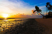 Sunset  tropical sea — Stock Photo