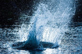 Water  explosion — Stock Photo