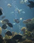 Akvárium — Stock fotografie