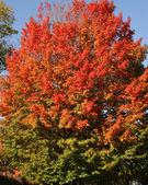 Fall — Stock fotografie