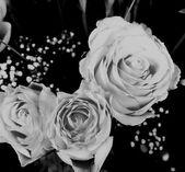Rosas — Foto Stock