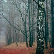 Stock Photo: Birch standing in foggy forest