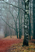 Birch standing in the foggy forest — Stock Photo