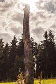 Totem — Foto Stock