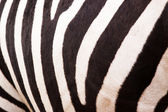 Zebra pattern — Stock Photo