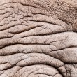 Stock Photo: Rhinoceros pattern