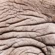 Rhinoceros pattern — Stock Photo #41437271