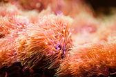 Oranžový akvarijní rostliny — Stock fotografie