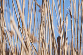 Dry grass — Stock Photo