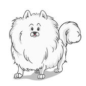 Pomeranian dog white — Stok Vektör