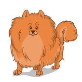 Pomeranian dog red — Stock Vector
