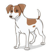 Jack russell brown — Wektor stockowy