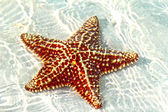 Beautiful starfish — Stock Photo