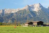 Summer Alps — Stok fotoğraf