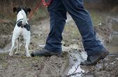 Hike with dog — Stock Photo