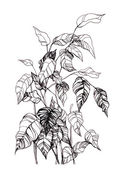 Ink drawing plant — Stock Photo
