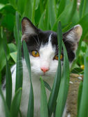 Black and white cat — Stock Photo