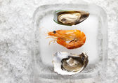 Oysters and shrimp — Stock Photo