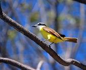 Yellow Bird — Stock Photo