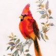 Watercolor painting of cardinal bird sitting on a branch — Stock Photo