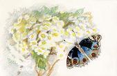 Фото Красивая бабочка — Стоковое фото