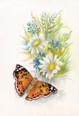 Beautiful butterfly picture — Stock Photo