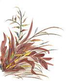 Hand drawn herbs — Stock Photo