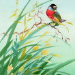 Watercolor drawing of a bird in grass — Stock Photo