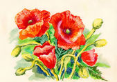 Illustration of Poppies — Stock Photo