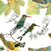 Wild birds and flowers — Stock Photo
