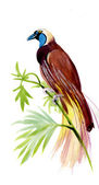 Exotiska fågelarter — Stockfoto