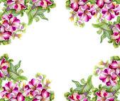 акварель цветочная рамка — Стоковое фото