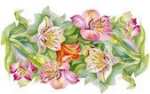 Floral alstroemeria pattern — Stock Photo
