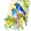 Drawing of bright birds on branch — Stock Photo #47043397