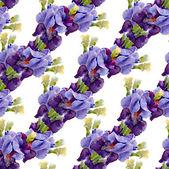 Irises pattern — Stock Photo