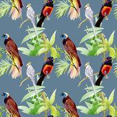 Exotic birds — Stock Photo