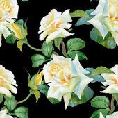 White roses background — Stock Photo