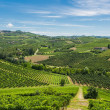 Italian vineyards — Stock Photo
