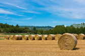 Haymaking in italian fields — 图库照片