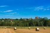 Haymaking in italian fields — Stock Photo