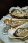 A platter of fresh organic raw oysters on ice — Stockfoto