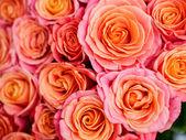 Schöne orange rose — Stockfoto