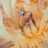 Wedding ring and beautiful flowers. — Stock Photo